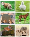 Baby Animal Matching Cards