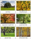 Deciduous & Evergreen Sorting Cards