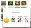 Food Chain Cards & Chart