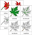 French Botany Nomenclature Card Set