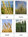 Types of Grains Nomenclature Cards