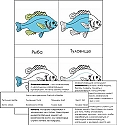 Russian Vertebrate Nomenclature Card Set