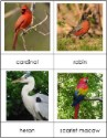 Types of Birds Nomenclature Cards
