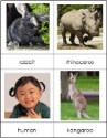Types of Mammals Nomenclature Cards