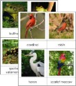 Types of Vertebrates Card Set
