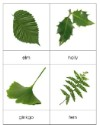 Types of Leaves Cards - Species