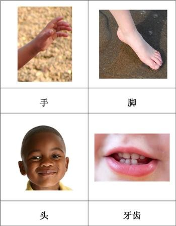 Chinese Parts of the Human Body Cards