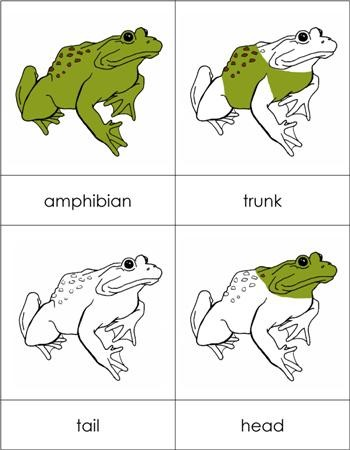 Parts of an Amphibian Nomenclature Cards