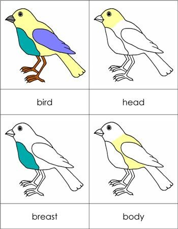Parts of a Bird Nomenclature Cards