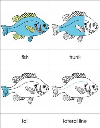 Parts of a Fish Nomenclature Cards