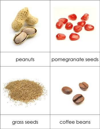 Types of Seeds Nomenclature Cards