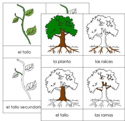 Spanish Botany Nomenclature Card Set
