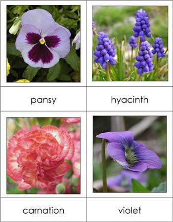 Types of Flowers Nomenclature Cards
